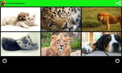 Hot Animal Wallpapers  screenshot 1/6