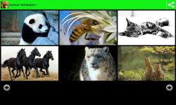 Hot Animal Wallpapers  screenshot 2/6