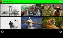 Hot Animal Wallpapers  screenshot 3/6