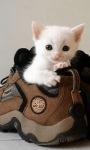 White Cat Baby LWP screenshot 1/3