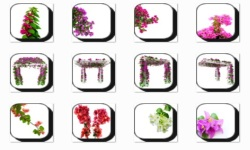 Bougainvillea Flowers Onet Classic Game screenshot 1/3
