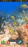 Colorful Fish in Sea Bed LWPfree screenshot 1/3