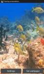 Colorful Fish in Sea Bed LWPfree screenshot 3/3