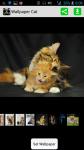 HD Wallpaper Cat screenshot 1/4