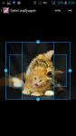 HD Wallpaper Cat screenshot 3/4
