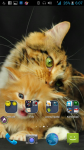 HD Wallpaper Cat screenshot 4/4