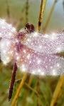 Glittery Butterfly LWP screenshot 2/3