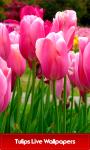 Best Tulips Live Wallpapers screenshot 1/6
