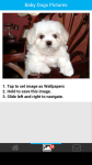 Baby Dogs Pictures screenshot 3/6