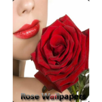 Rose Wallpapers Background screenshot 1/3