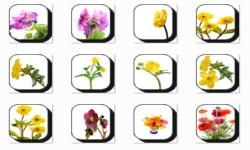 Buttercup Flowers Onet Classic Game screenshot 2/3