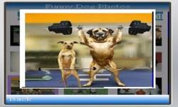Funny Dog Photos screenshot 4/4