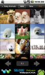 AnimalPix screenshot 5/6