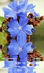 Blue Flower Reflection Live Wallpaper screenshot 2/3