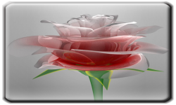 Love Rose Live Wallpaper HD screenshot 1/3