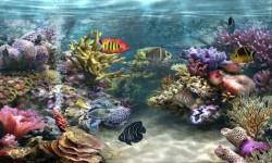 Galaxy Live Aquarium Wallpaper screenshot 3/6
