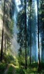 Nature Live Wallpaper Nature Frames screenshot 2/6