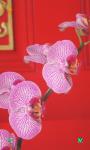 Flowers HD Wallpapers Free screenshot 3/6