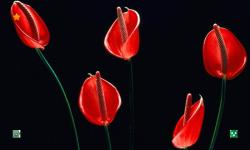 Flowers HD Wallpapers Free screenshot 6/6
