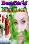 Benefits of Mint Leaf screenshot 1/3