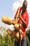 Benefits of Cassava screenshot 2/4