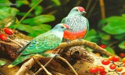 Singing Birds Live Wallapapers 2015 screenshot 1/3