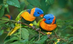 Singing Birds Live Wallapapers 2015 screenshot 2/3