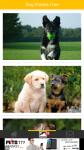 Dog Photos Free screenshot 2/6