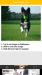 Dog Photos Free screenshot 3/6