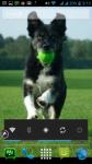 Dog Photos Free screenshot 6/6