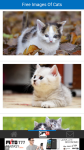 Free Images Of Cats screenshot 2/6