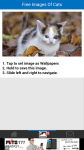 Free Images Of Cats screenshot 3/6