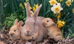 Cute Funny Rabbits Backgrounds Android screenshot 2/3