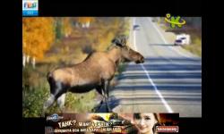Kids Channel screenshot 5/5