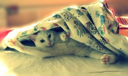 Cute Cats Wallpaper HD screenshot 2/4