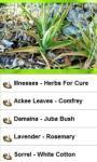 Jamaican Herbs screenshot 1/3