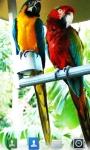 Parrots Live  Wallpaper screenshot 1/5