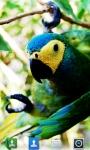 Parrots Live  Wallpaper screenshot 2/5