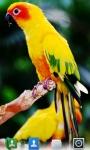 Parrots Live  Wallpaper screenshot 4/5