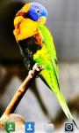 Parrots Live  Wallpaper screenshot 5/5