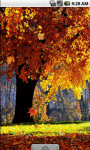 Autumn Forest Cool Live Wallpaper screenshot 2/4