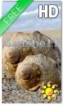 Sea Shell Live Wallpaper HD screenshot 1/2