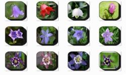 Bell Flowers Onet Classic Game screenshot 2/3