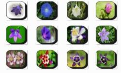 Bell Flowers Onet Classic Game screenshot 3/3