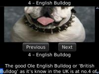 Worlds Most Expensive Dog Breeds screenshot 1/2