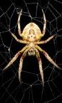 Spider LWP screenshot 3/3