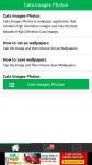 Cats Images Photos screenshot 1/6