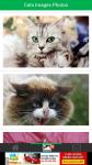 Cats Images Photos screenshot 2/6