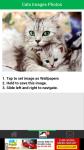 Cats Images Photos screenshot 3/6