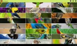 Birds Wallpapers by lalandapps screenshot 1/3
